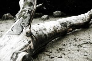 deadtree-ii-1500192
