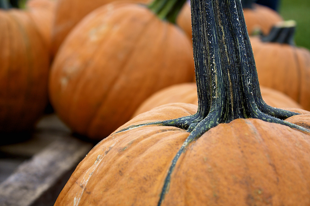 What I Hate About October