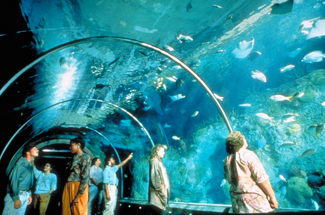 Tunnel of water inside aquarium - New Orleans family adventures