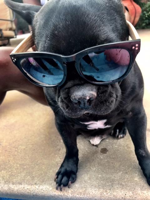 french bulldog in sunglasses - being a boy mom
