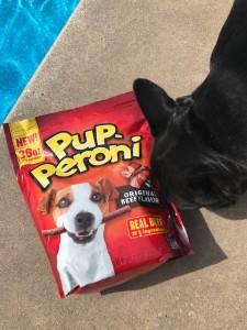 dog treats and a french bulldog - choosing the perfect dog