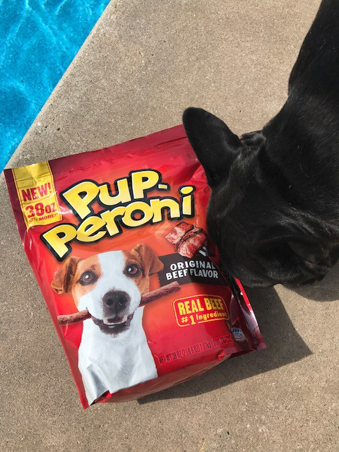 dog treats and a french bulldog - choosing the perfect dog